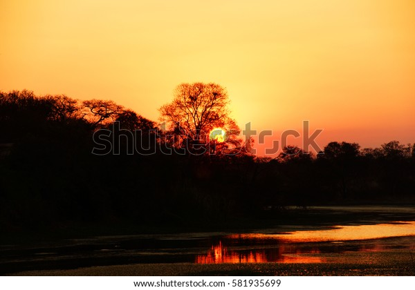 Sunset above a river and a rain forest in Zimbabwe, the sun is behind a tree