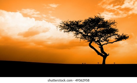 sunset in the African savannah, Masai mara, kenya