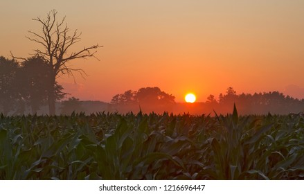 sunset in the agro-landscape.