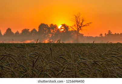 sunset in the agro-landscape. sunset in the agro-landscape on the background of wheat field