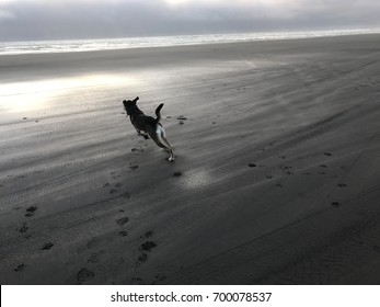 Sunset along Oregon coast with silhouette of blissful dog running and playing on the beach