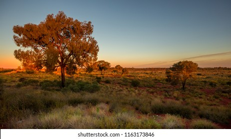 sunset in the australian bush