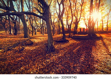Sunset in autumn forest.  Beautiful nature background