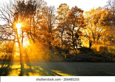 Sunset in autumn park. Autumn landscape.