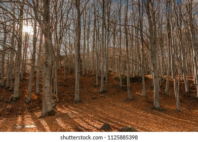 Sunset in autumnal forest. Moncayo, Spain