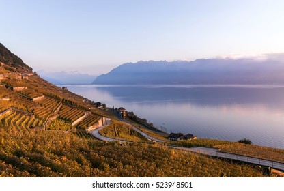 Sunset the autumnal vineyard terraces, lake Leman and Alps Mountains. Region Lavaux, Switzerland