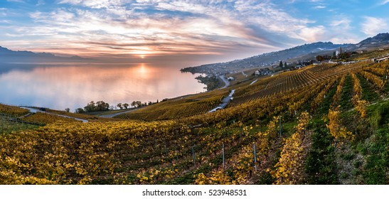 Sunset the autumnal vineyard terraces, lake Leman. Region Lavaux, Switzerland