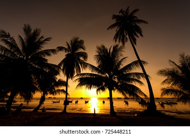 Sunset back to the horizon with calming. There are coconut trees, the horizon and the horizon.