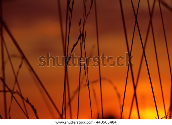 Sunset background with grass