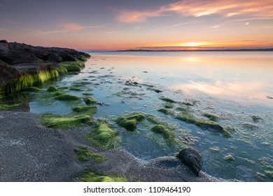 Sunset at the Baltic Sea on the island Ruegen. Sunset with green seaweed.