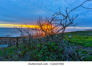 Sunset at the beach with a branches in the foreground