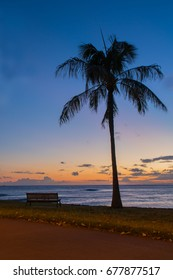 Sunset beach view with a single coconut tree and a bench in foreground, Ala Moana Beach Park, Honolulu, Hawaii