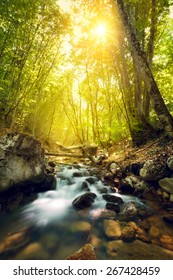 Sunset in the beautiful forest. Trees, water and stones. Mountain river. Summer landscape in Crimea