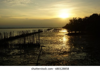 Sunset beautiful of mangrove forest , Don Hoi Lom , Thailand