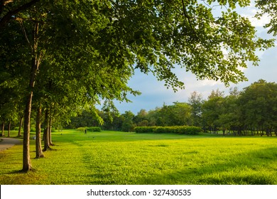 Sunset in beautiful park. Green grass with tree