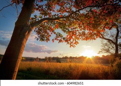 Sunset Behind Autumn Tree