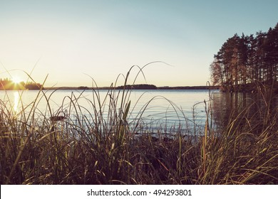 Sunset behind the grass. Focus point is on the grass. Forest and colorful sunset in the background. Image taken in Finland. Image has a vintage effect applied.