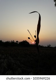 sunset behind grass and tree