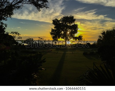 Sunset behind a huge tree, beautiful silhouette of the tree