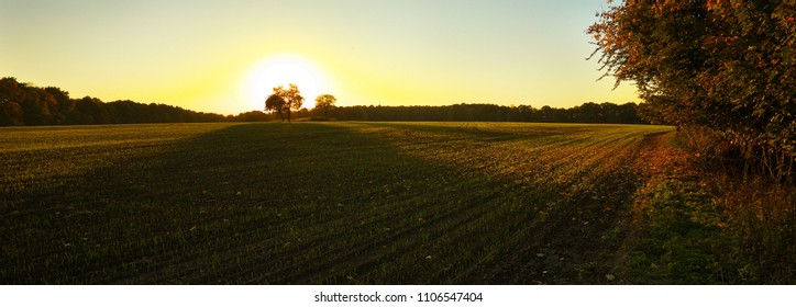 A sunset behind an isolated tree on the field