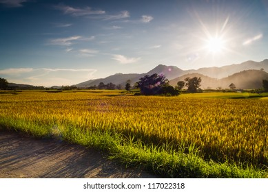 Sunset behind the mountains in the rice field with lens flare effect