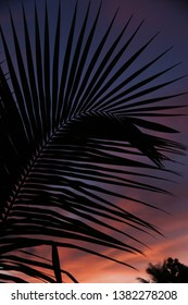 Sunset behind palm at Seychelles.