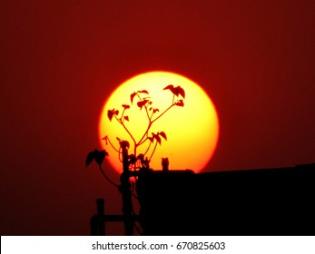 sunset behind plant