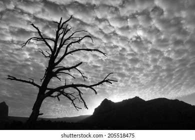 Sunset behind rocky cliffs, with silhouette of an old tree and beautiful clouds. Black and White.