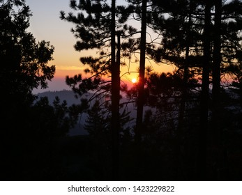 Sunset from behind sequoia trees at the National Park