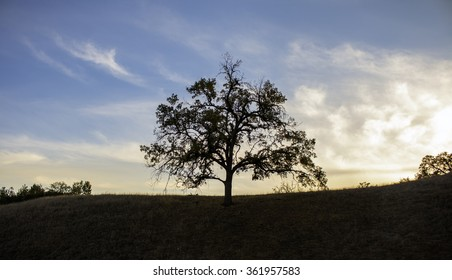 Sunset behind a single tree in southern California.