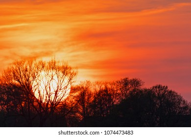 sunset behind a tree, lewitz national park, germany