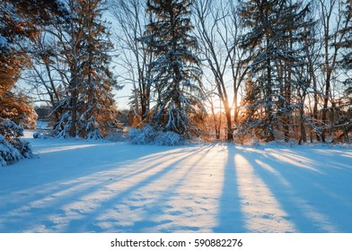Sunset Behind Trees in Snow