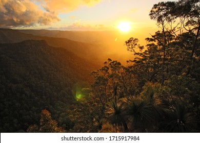Sunset between the trees in Australia, Rain Forest