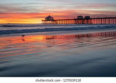 Sunset Bird Blue. Huntington Beach, CA