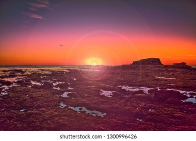 Sunset at Bird Rock, La Jolla, San Diego, California with silhouettes of rocks and a sea gull in the distance, and reflections of the colorful sky in the trapped still waters of the tide pools.
