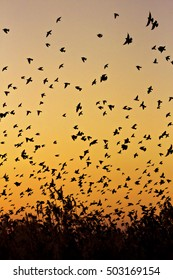 sunset and birds flock warm color background