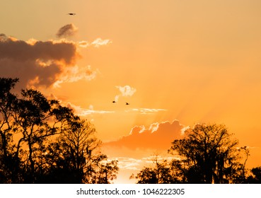 Sunset and Birds Flying over the Okefenokee Swamp in Georgia