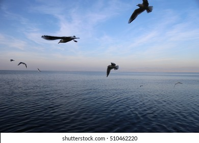 Sunset and birds of Leman Lake in Evian