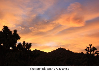 sunset in the blackrock campground joshuatree national park