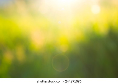 Sunset in the blurred grass