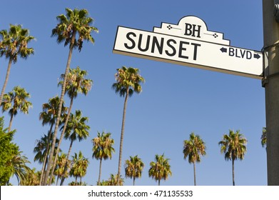 Sunset Boulevard street sign with palm trees in the background.