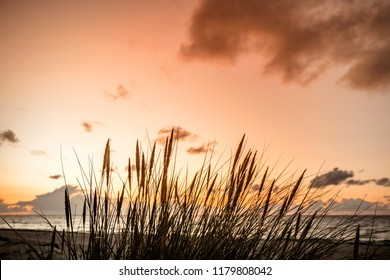 Sunset by the ocean with reed silhouettes in front of the sea at dawn
