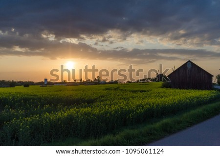 Sunset by a village with canola fields on the swedish island Oland