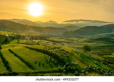 Sunset in Calata viilage from Transylvania,the road to home,transhumance, Cluj , Romania