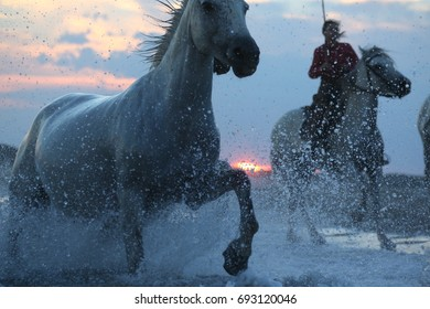 Sunset in Camargue, horses on the sea shore