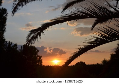 Sunset closeup through palm leaves in Madrid