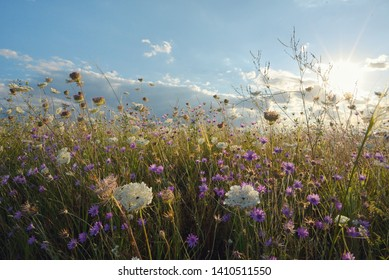 Sunset and clouds over summer meadow