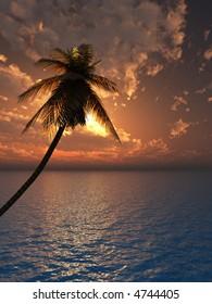 Sunset coconut palm tree on ocean coast - 3d illustration.