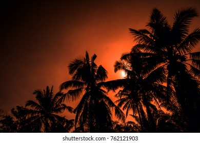 Sunset and cocunut tree  summer background