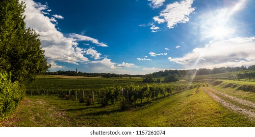 Sunset in Collio, a location known for a fine wine production, Friuli, Italy